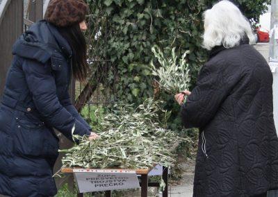 11 Cvjetnica 2018.